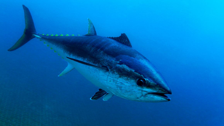 بسبب تغير المناخ.. ظواهر غريبة تطرأ على الأسماك!