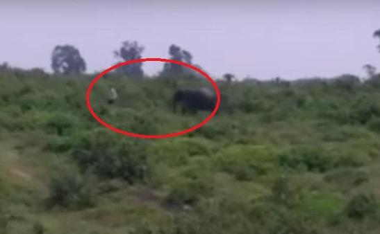 """بالفيديو: نهاية مأساوية لرجل حاول التقاط """"سيلفي مع فيل""""!"""