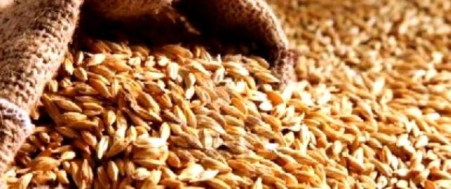 «مؤسسة الحبوب»: حريق مركز الشميسي لم يؤثر على أرصدة الشعير