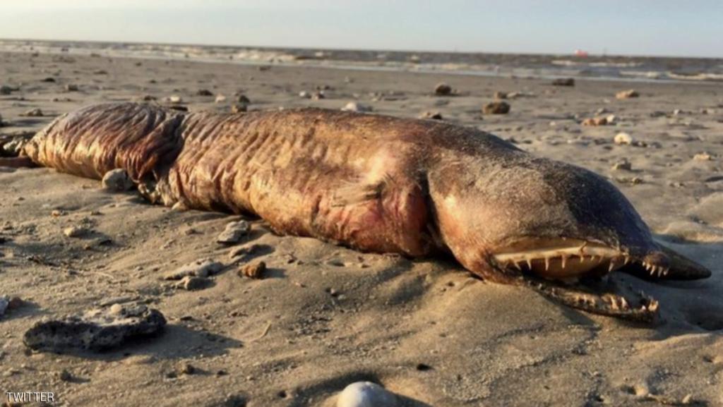 """أخيرا.. التوصل لحقيقة """"مخلوق البحر الغامض"""" في تكساس"""