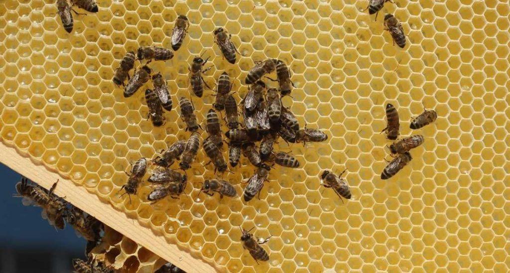 هل تعلم أن 75 % من عسل النحل في العالم به مبيد حشري ؟ دراسة تؤكد ذلك !