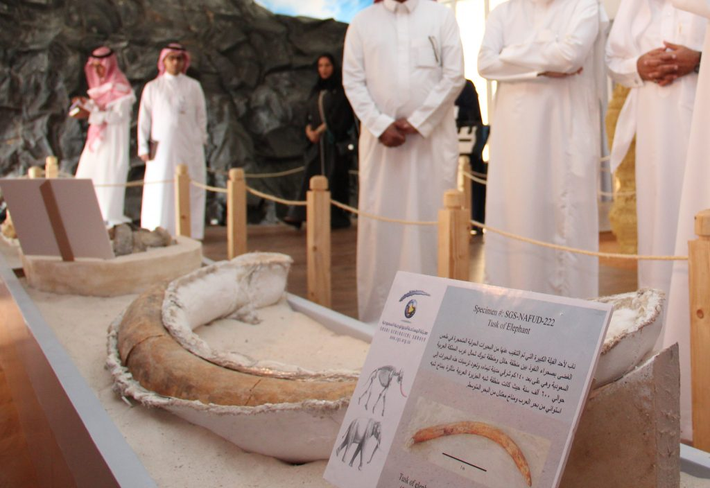 بقايا فيل وتمساح من 50 ألف سنة تجذب زوار معارض آثار المملكة