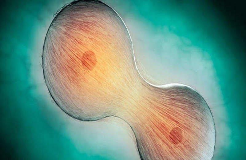 """علاج """"سحري"""" يعيد للخلايا البشرية شبابها"""