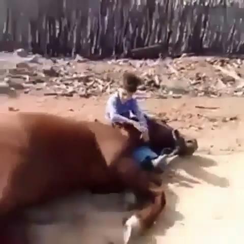 شاهد.. علاقة صداقة نادرة بين طفل وحصان تثير الإعجاب