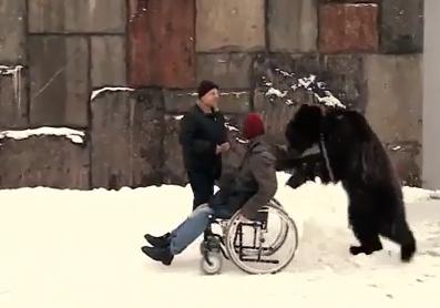 دب يسعف مدربه في سيرك موسكو