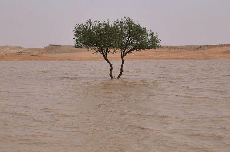 بالفيديو.. أمطار غزيرة على لينة وأعيوج لينة وشعبة نصاب بمحافظة رفحاء