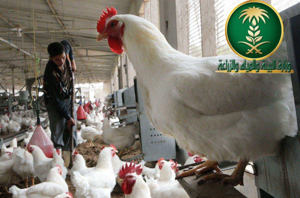 """""""البيئة """" تصدر الإيجاز اليومي لمتابعة حالات الإصابة بإنفلونزا الطيور H5N8 لم تسجل إي إصابة"""