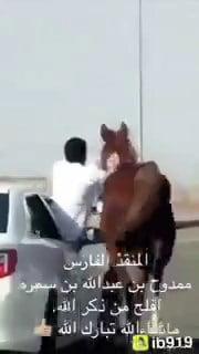 شاهد..شاب سعودي يروض حصانا أعاق السير على طريق سريع