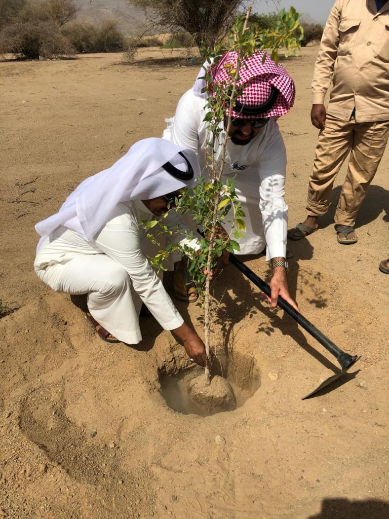 أمانة نجران تزرع أكثر من 500 شجرة بمنتزه الملك فهد