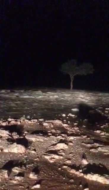 بالفيديو.. أمطار رعدية على القاعية بمنطقة الرياض