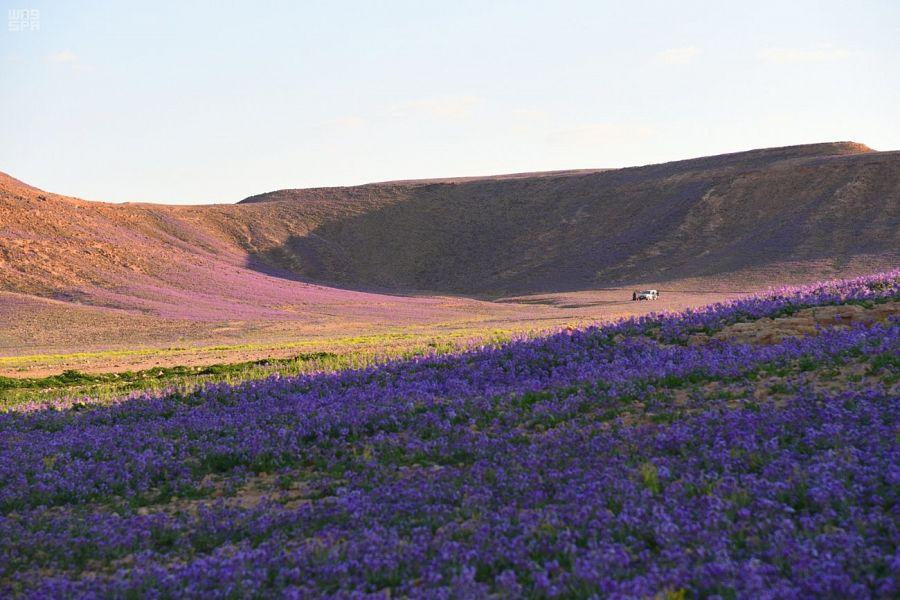 ربيع الجوف يكسو الأرض بألوان الطبيعة