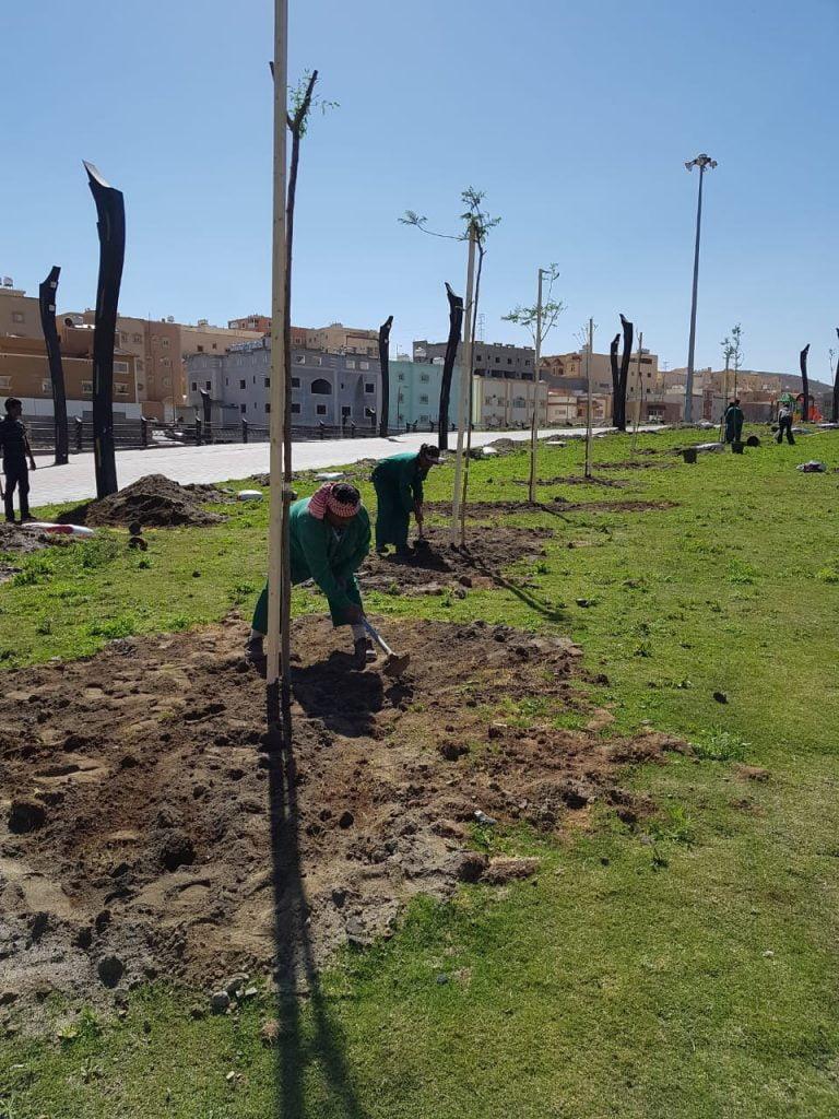 أمانة عسير توزع 5800 شجرة على طرقات و احياء أبها