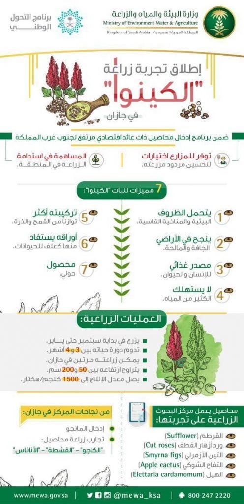 """""""البيئة"""" تطلق تجربة للتوسع في زراعة محصول """"الكينوا"""" في جازان ضمن برنامج إدخال محاصيل واعدة لجنوب غرب المملكة"""