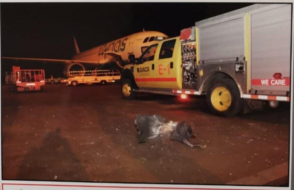 فرنسا تدين الهجوم الإرهابي على مطار أبها وتعرب عن تضامنها مع المملكة