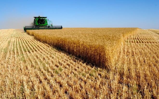 """""""الحبوب"""" تنهي ترسية الدفعة الرابعة من الشعير العلفي المستورد لهذا العام"""