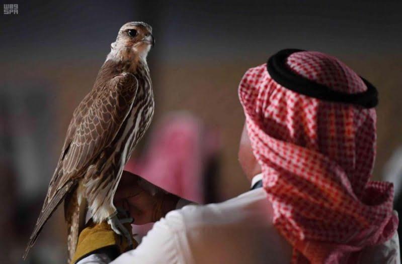 237 ألف ريال حصيلة اليوم الـ15 لمزاد نادي الصقور السعودي