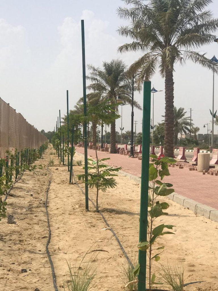 بلدية رأس تنورة تزرع ألف شجرة من أشجار الظل خلال الأسبوع الماضي