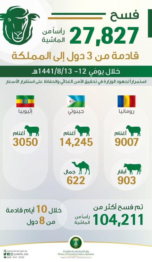 """""""البيئة"""" : 27,827 رأساً من المواشي تصل من رومانيا وإثيوبيا وجيبوتي إلى المملكة"""