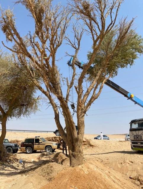 القوات الخاصة للأمن البيئي توقف 37 مخالفًا لنظام البيئة لارتكابهم مخالفات رعي