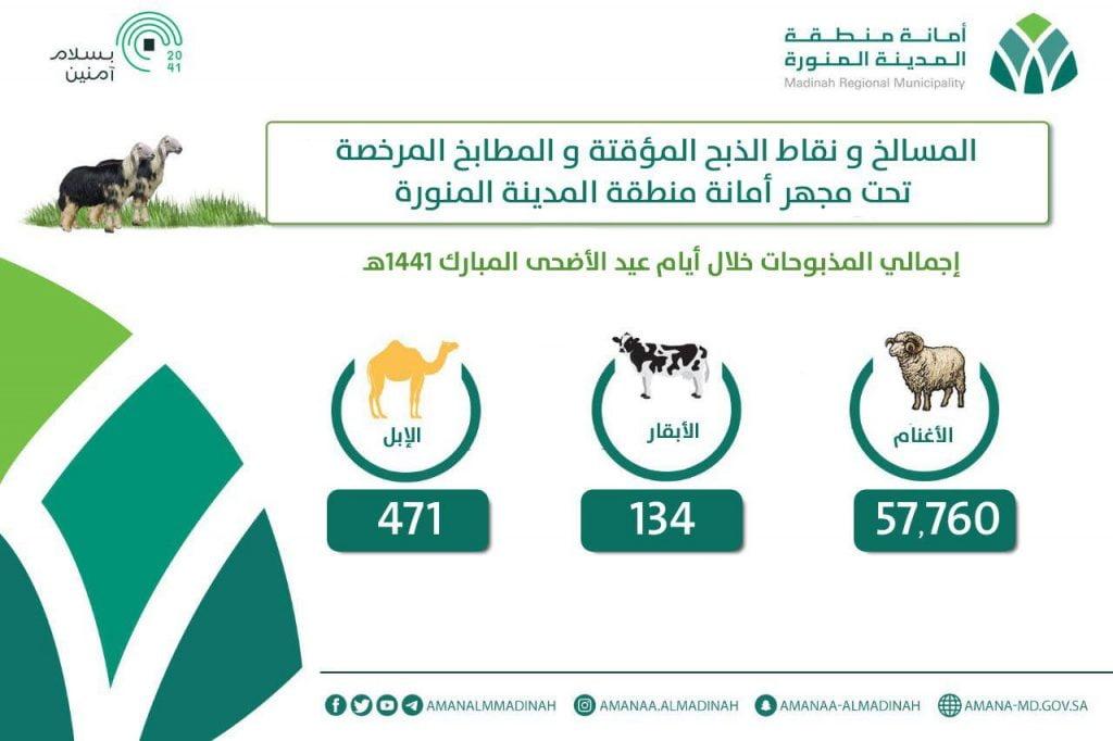 أمانة المدينة المنورة تُشرف على ذبح 58 ألف أضحية خلال أيام عيد الأضحى