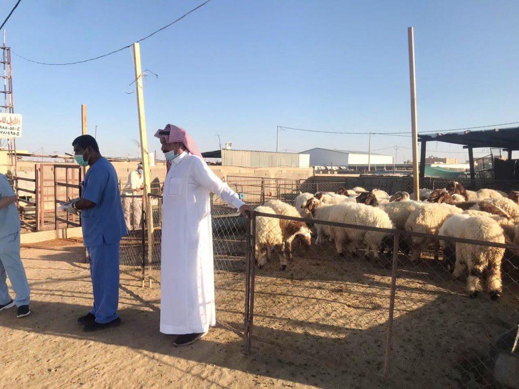 مكتب البيئة برفحاء ينفذ حملة توعوية في سوق الماشية