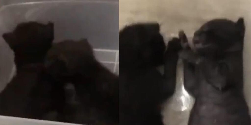 فيديو.. داخلية الكويت تطيح بشخص نشر فيديو له وهو يقتُل قطتين صغيرتين مستخدمًا غاز