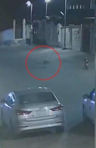 """""""كلاب ضالة"""" تُهاجم طفلًا يركب دراجته في شارع ببريدة .. وتدخل قائد مركبة في اللحظات الأخيرة"""