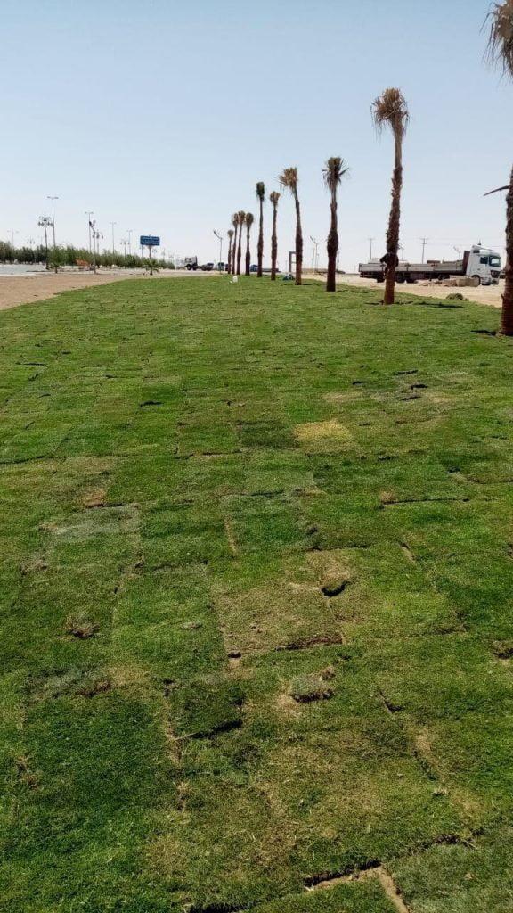 بلدية تيماء: زراعة 49 ألف م2 من المسطحات الخضراء في المحافظة