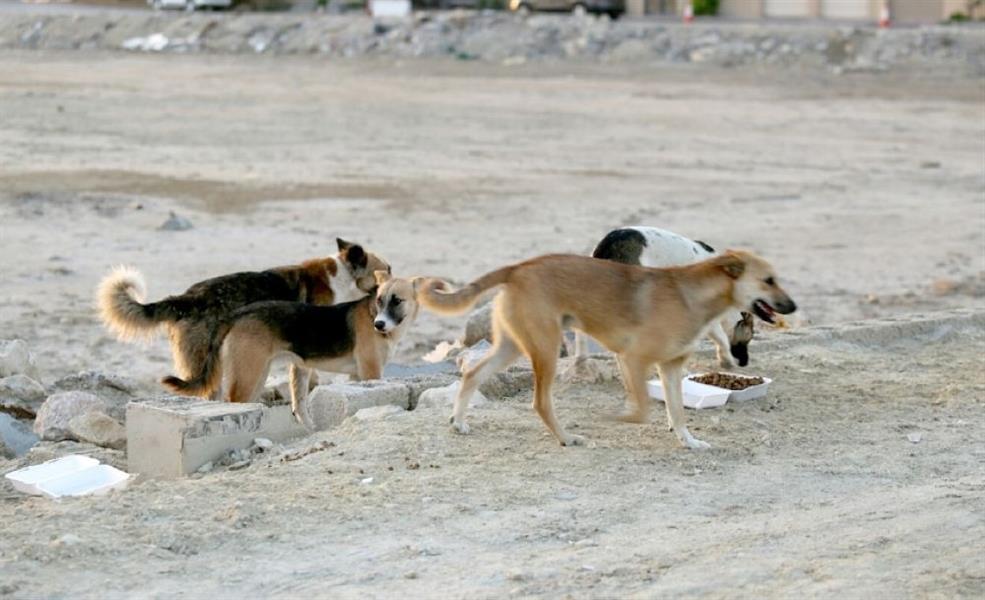 فيديو.. لحظة هجوم كلاب ضالة على طفل في تبوك