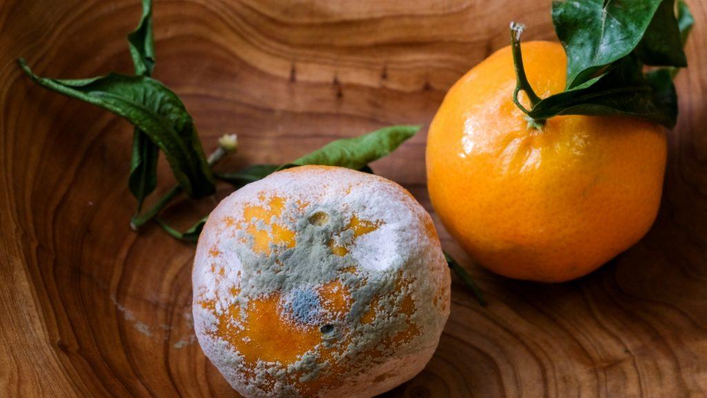 طبيب يحذر: الفطر الأسود موجود في الفاكهة والخضروات