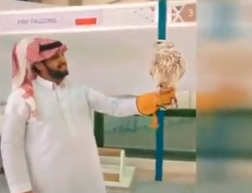 تعرّف على سعر الصقر الأغلى في المملكة (فيديو)