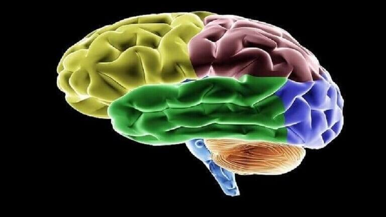 """""""تتسبب في ضغف الذاكرة""""..خبراء تغذية يكشفون 6 مواد غذائية مضرة للدماغ"""