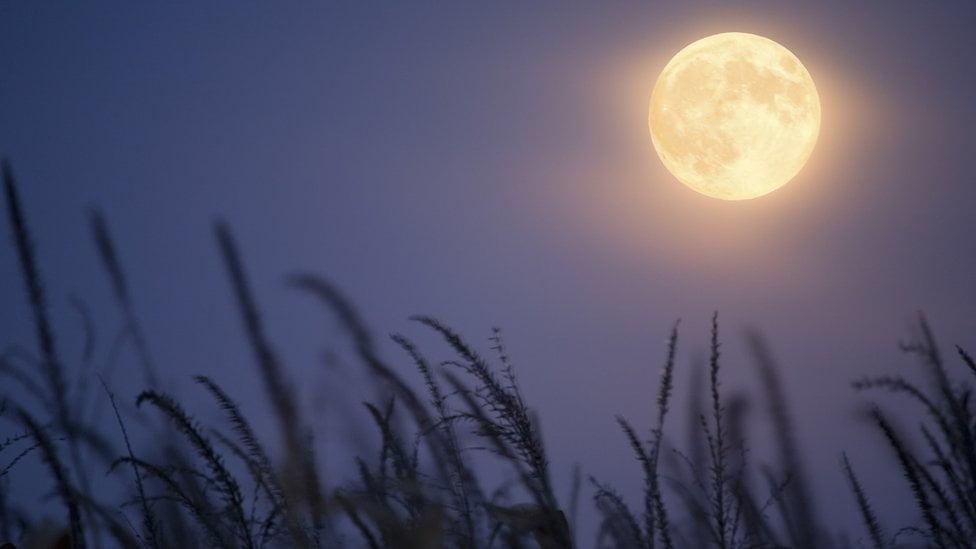 قمر الحصاد.. البدر الأخير في فصل الصيف يظهر الليلة